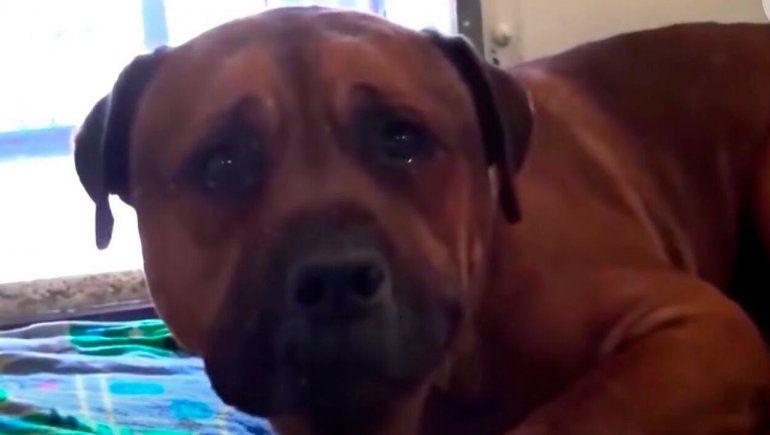 El video viral del perro que llora porque lo abandonaron