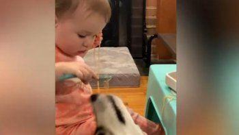 Viral en YouTube: bebé y perro enseñan la importancia de compartir.
