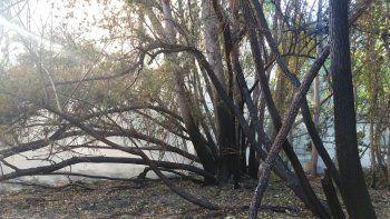 Se reactivó el incendio del predio del CPE cerca del Paseo Costero