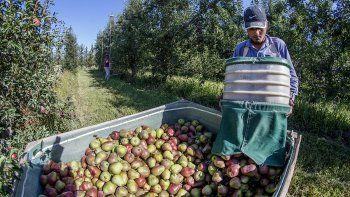 Llegan 30 mil golondrina para la cosecha en pandemia