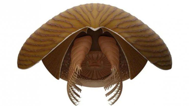 Titanokorys gainesi, el nuevo gigante del Cámbrico