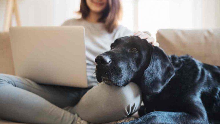 Cuidados para la mascota durante un aislamiento