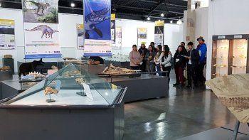 Zapala tiene una de las mayores colecciones de dinos marinos