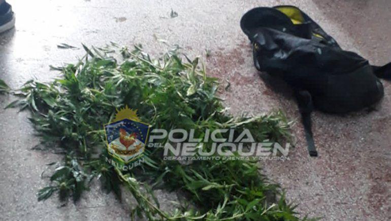 Quisieron apedrear un patrullero y les hallaron ramas de marihuana