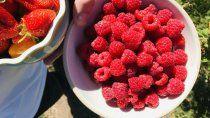 los garcia, sinonimo de frutos rojos