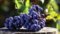 cabernet franc: el tinto que reinventa el paladar argentino