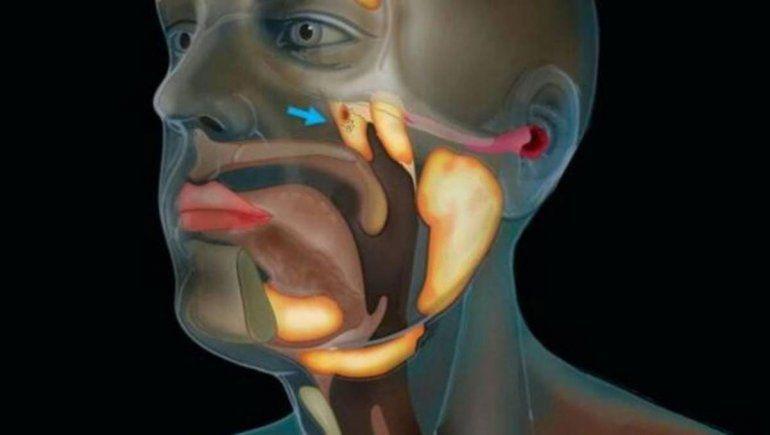 Hallaron un órgano desconocido en la cabeza humana