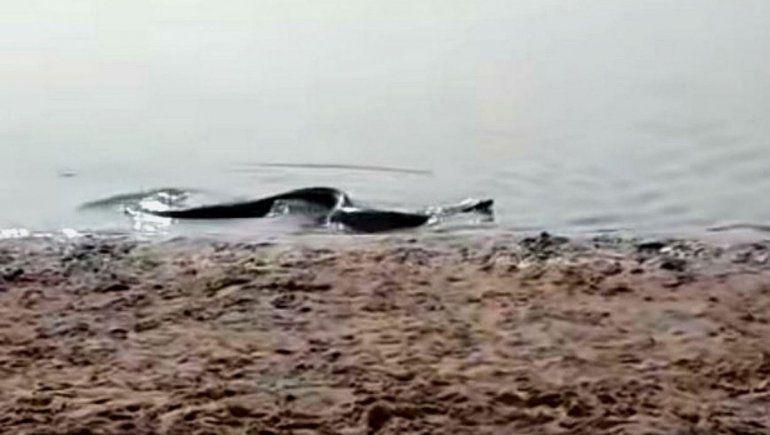 Una anaconda sorprendió a turistas en una playa