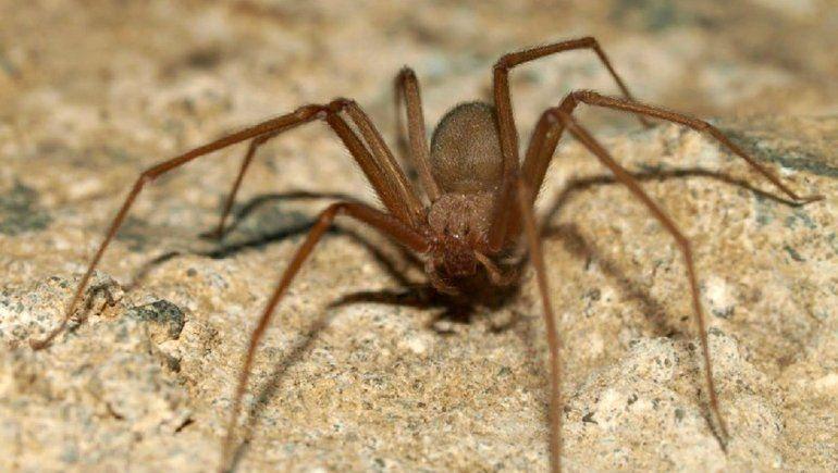 Alertan por la aparición de arañas, alacranes y serpientes
