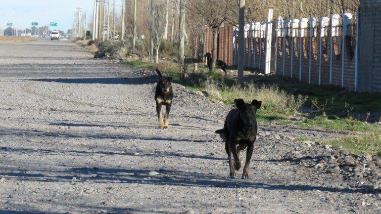 Los perros cimarrones son un verdadero problema en Nueva Esperanza. Los vecinos dicen que el Municipio se desentendió del asunto. La gente va al barrio a tirar cachorros recién nacidos.