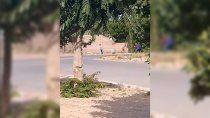 un video, la clave para identificar a los agresores de nahuelcar