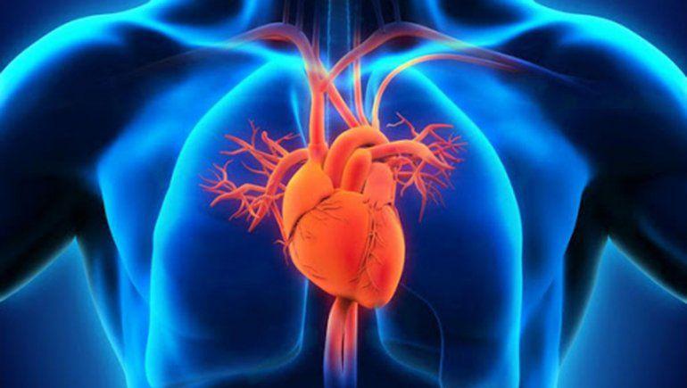 Crearon el primer atlas del corazón humano con cada célula