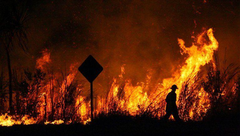 Incendios forestales: ¿Cuál es la situación en Neuquén?