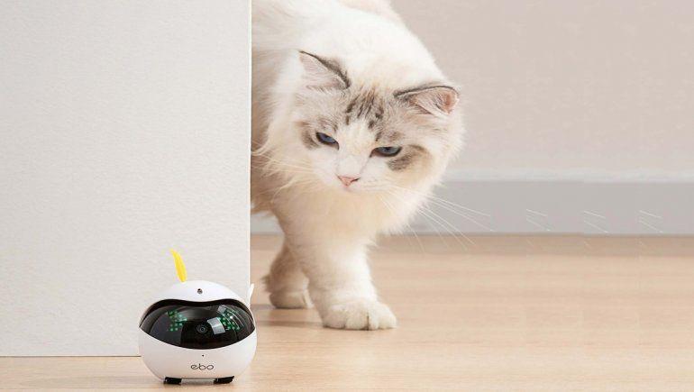 Juguetes y artefactos tecnológicos para gatos: ¿son recomendables?