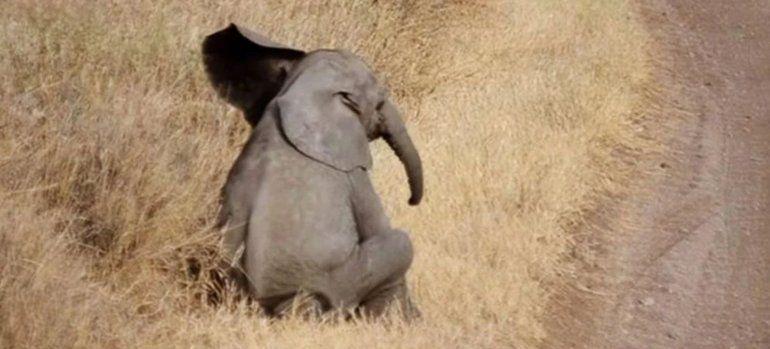 El elefante no deja de sumar interacciones en Instagram
