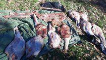 decomisaron 400 kilos de carne de ciervo, jabali y conejo