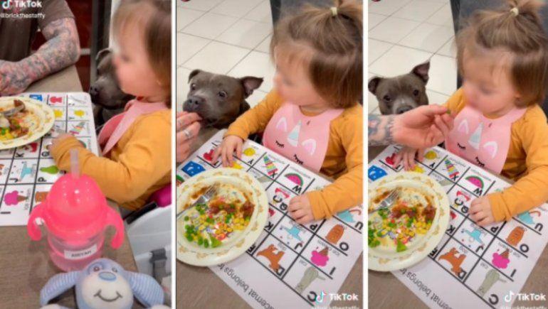TikTok: niña evita comer hasta que su perro pruebe sus alimentos.