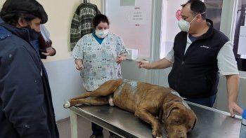 Hicieron 38 allanamientos por maltrato animal en Neuquén capital