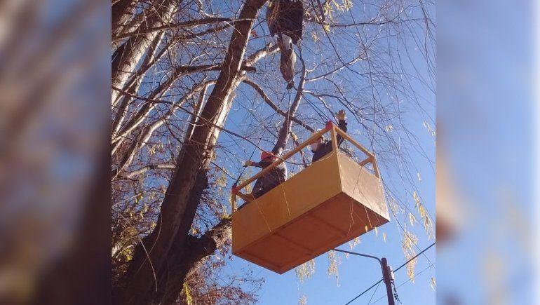 Vecinos de La Herradura reclaman para que retiren viejos árboles