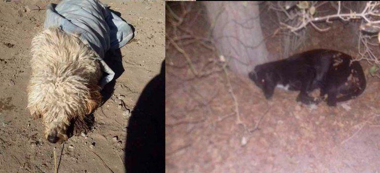 Denuncian masivo envenenamiento de animales en El Cuy