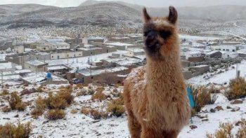 jujuy: nevo en pleno verano y los cerros amanecieron blancos