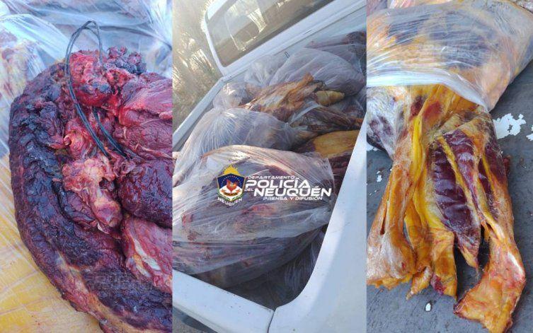 Senillosa: decomisaron 600 kilos de carne equina