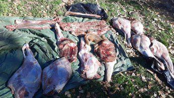 Decomisaron 400 kilos de carne de ciervo, jabalí y conejo