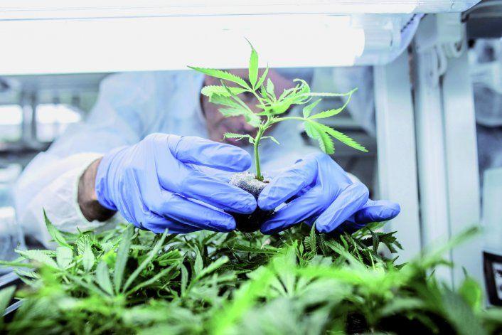 Plottier debate sobre el cannabis medicinal.