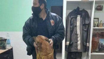 Reencuentro: apareció Roma, la perra experta en rastrillajes