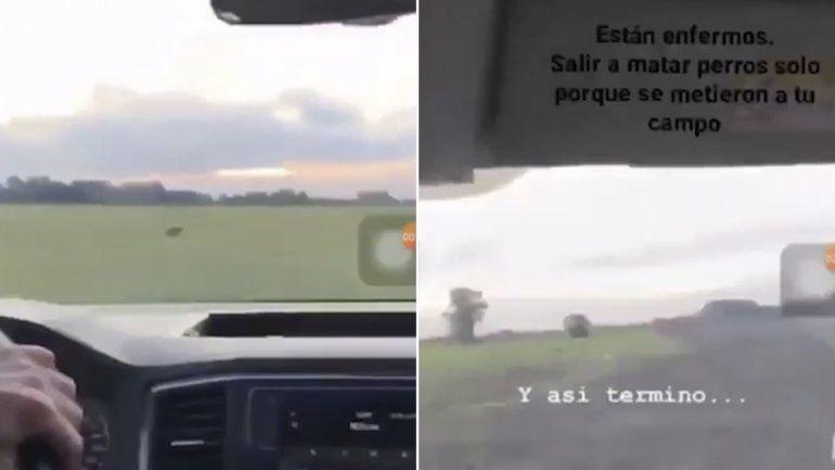 Subió un video disparando a perros y causó indignación en las redes