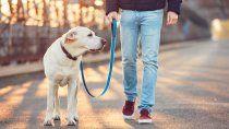 ¿cuantas veces deberia sacar a pasear a mi perro?