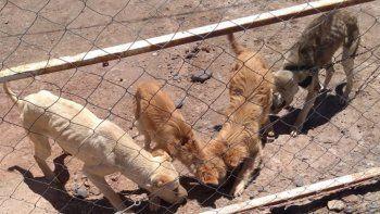 Parque Industrial: rescatan a cuatro perras al borde de la muerte
