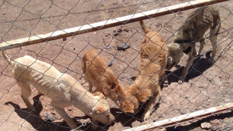 Rescataron a cuatro perras al borde de la muerte en Parque Industrial