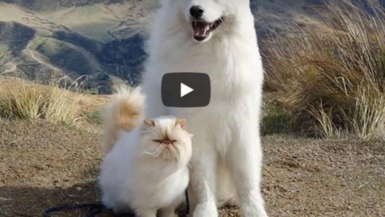 Este par no deja de sumar reproducciones en YouTube