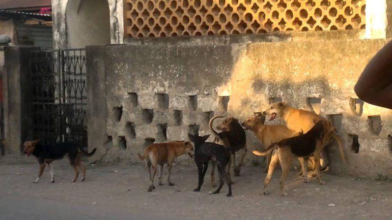 Los perros callejeros son causa de proecupación en Neuquén. Foto ilustrativa.