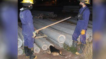 atrapado y sin salida: rescataron a un perro atorado en una columna