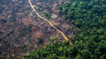 volvio a crecer la deforestacion en la amazonia de brasil