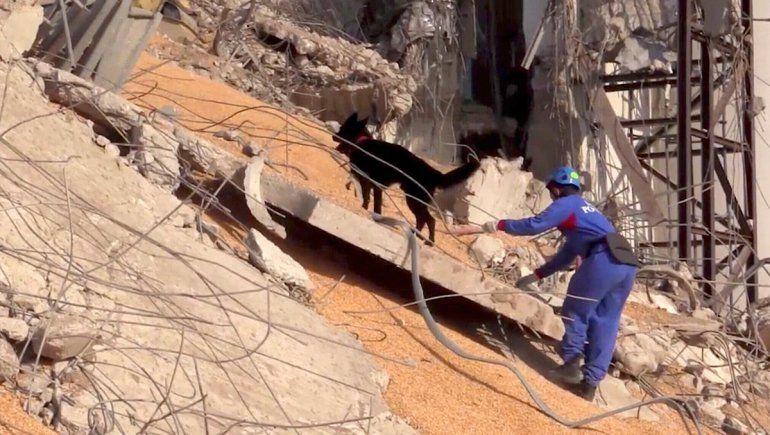 Beirut: buscan mascotas perdidas entre los escombros