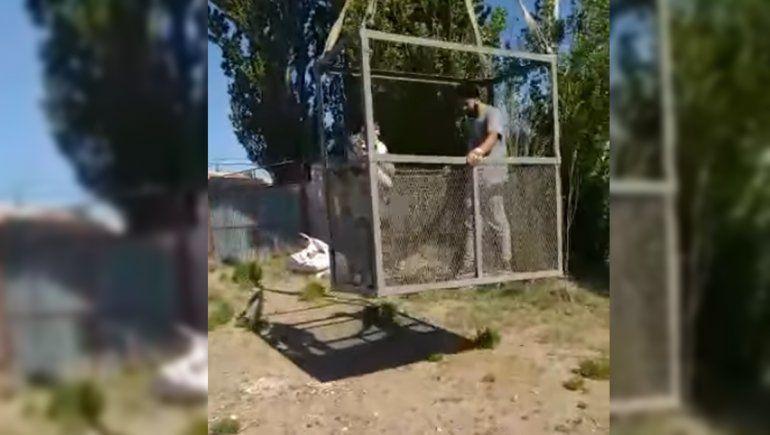 Mirá cómo rescataron a un gato que estuvo 6 días en la copa de un árbol