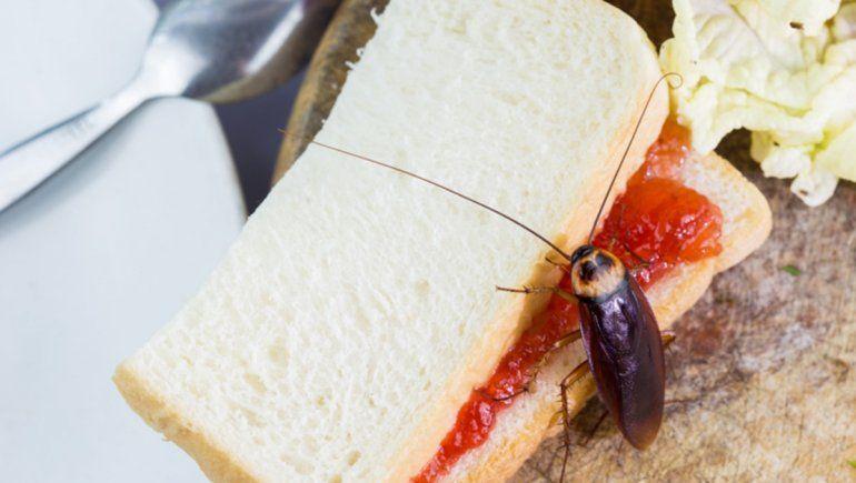 El ataque viral a un restaurante en China con más de mil cucarachas