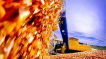 el gobierno eliminara las restricciones a la exportacion del maiz