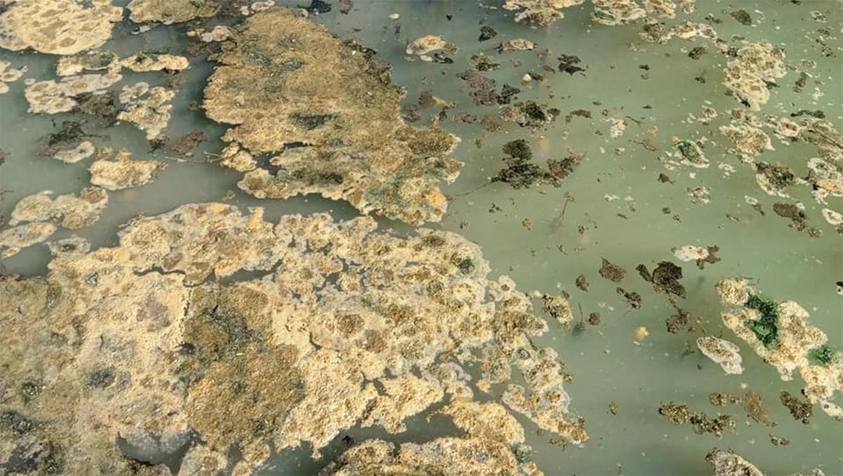 vecinos denuncian que tiran residuos cloacales en el rio agrio