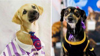 Facebook: refugio de perros realizó sesión de fotos para incentivar la adopción.