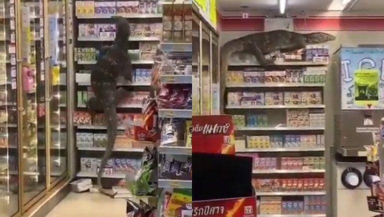 Twitter: un lagarto gigante entró a un supermercado y trepó una góndola
