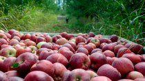 productores de fruta enojados por el aumento de la luz