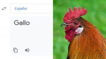 El traductor de Google y su inexplicable pronunciación de gallo