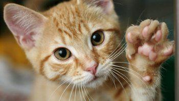 Viral: joven construye casa para su gato dentro del televisor