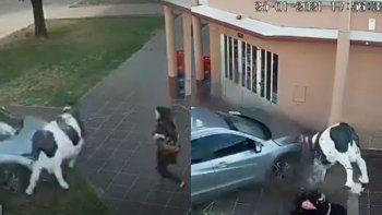 Video: una mujer de salvo de milagro luego de ser atropellada por un auto
