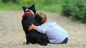 TikTok: niño conmueve en las redes tras recibir réplica de su perrita fallecida.   Foto referencial.