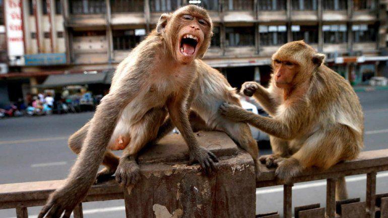 Los primates tendrían una cierta conciencia sobre la muerte